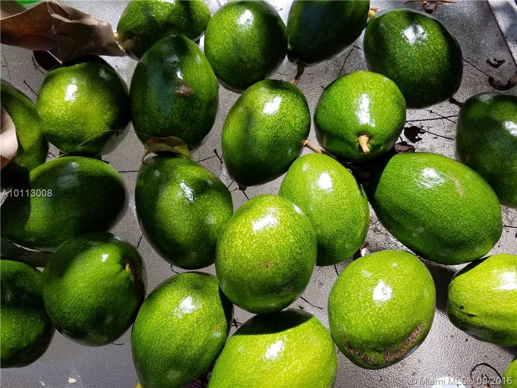 3159 Jackson ave-A coconut-grove--fl-33133-a10113008-Pic24